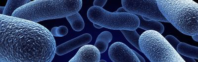 ¿A qué temperatura se multiplican las bacterias más rápidamente?